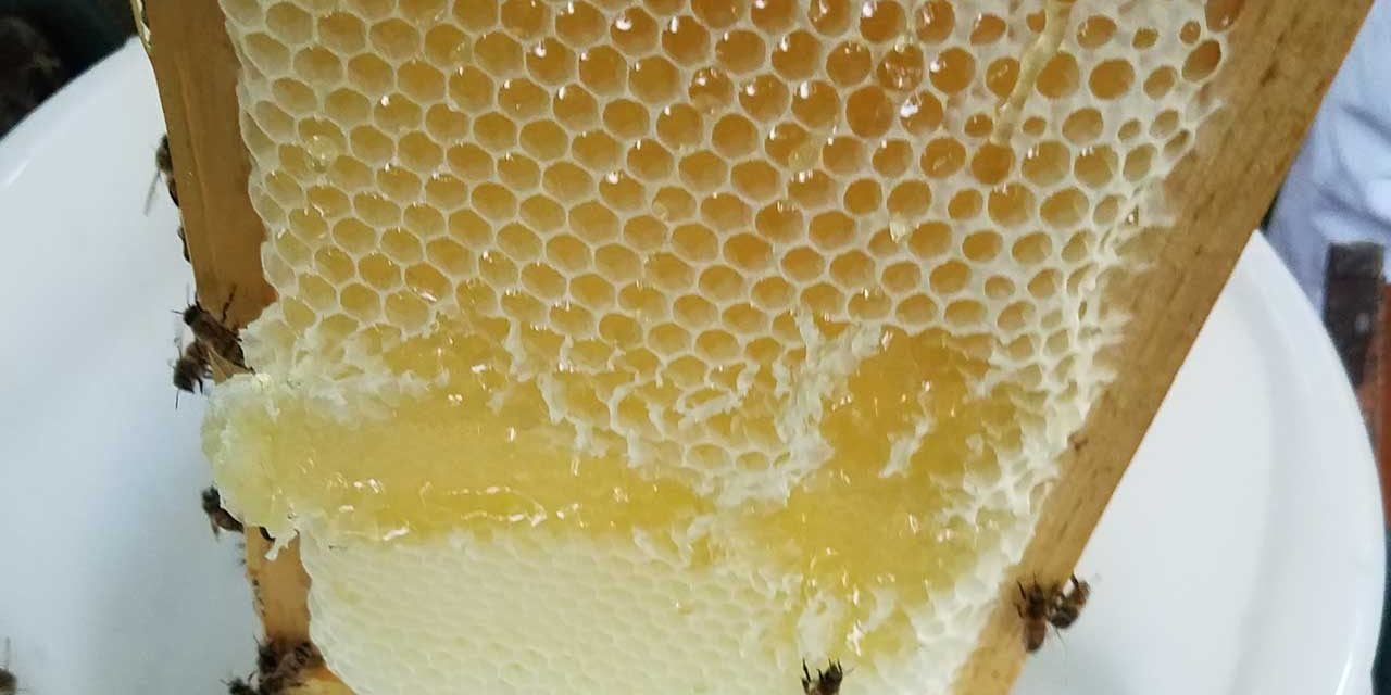 Neely Goes Into the Bee Hive!
